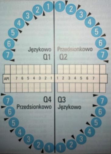 zeby_nry